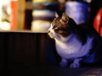 沖縄のネコ写真全応募作品 Instagram編その3