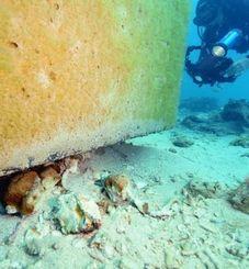 コンクリートブロックの下敷きになったサンゴ。一部は砕け、周辺に転がっていた=2月26日午後、名護市の大浦湾