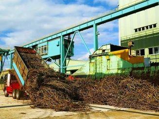大型トラックで工場敷地内に運ばれたサトウキビ=8日午前、宮古島市下地の沖縄製糖宮古工場