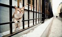 ねこに会いに行こう 岩合光昭写真展(7)