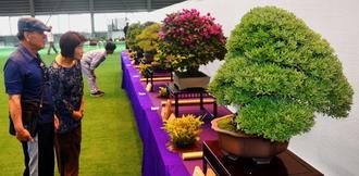 個性あふれる盆栽を鑑賞する来場者=11日、うるま市石川屋内運動場