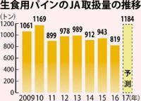 パイン、過去最高1184トン出荷へ JAおきなわ 前年比44%増