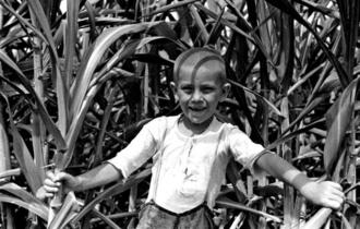 現在の沖縄市古謝にあったサトウキビ畑で無邪気な笑顔を浮かべる儀間政夫さん。生前、「人に会うよりも1人で畑仕事をしていた方が楽しかった」と語っていたという=1935年(写真は朝日新聞社提供)