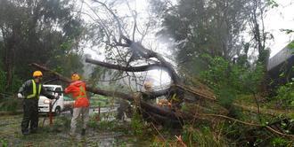 暴風で倒れた木を切断する作業員=29日午後、名護市許田