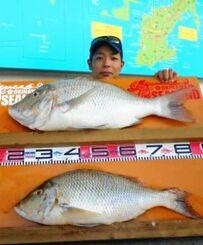本部海岸で71.5センチ、62.5センチと5.68センチ、3.10キロのタマンを釣った内間奨之さん=7月19日