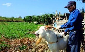 多良間ピンダを飼育する農家。島ではピンダを活用した地域興しが進む=2月10日、多良間村塩川