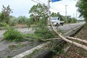 道路の片側をふさぐ倒木=12日午後3時すぎ、石垣市大浜