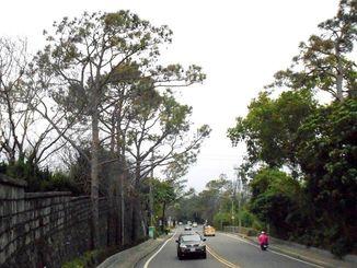 松食い虫の被害でわずかに残った登山道路の琉球松並木