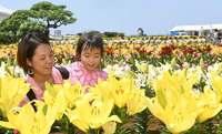 「花のじゅうたん」にイエェ〜イ! 伊江島ゆり祭り、見ごろに 沖縄