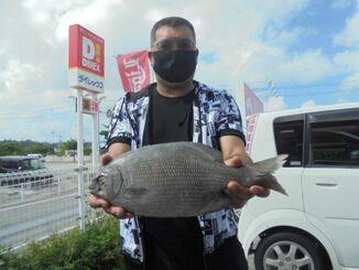 北部の海岸で41センチ、1・38キロのイスズミを釣った南島会の島袋和志さん=18日