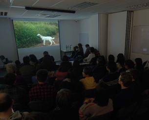 スクリーンのかわいらしいヤギに見入る観客=ロンドン市内の日本クラブ