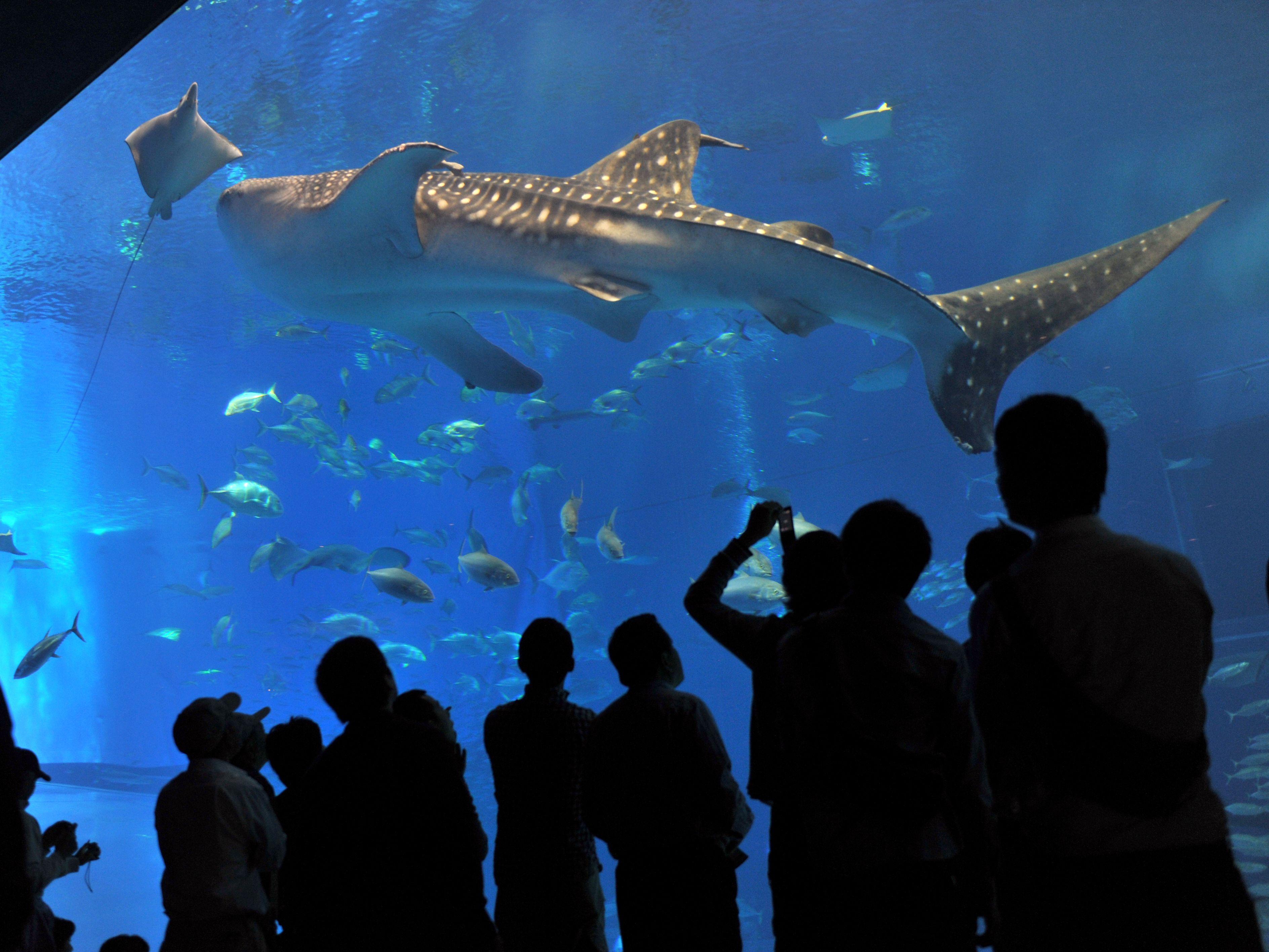 美 ら 海 水族館 コロナ