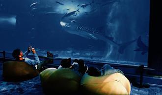 ビーズクッションに座ってジンベエザメを観賞する来場者=7日、本部町・沖縄美ら島水族館