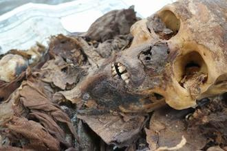 約3千年前のひげのあるミイラ(アコリス調査団提供)