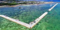 サンゴ移植許可、知事の撤回見据えた判断 辺野古の土砂投入予定まで1カ月