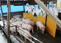 【深掘り】豚コレラの都市型農場、殺処分に遅れ 大阪は狭い敷地に住宅近接、埋却できず