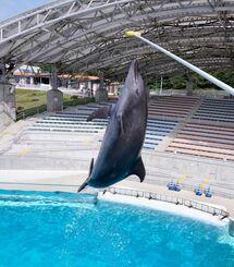 オキちゃん劇場再開にそなえ、日々トレーニングに励むイルカたち=20日、本部町の海洋博公園(下地広也撮影)