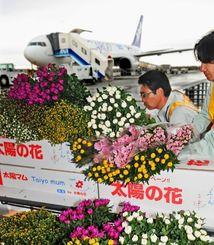 ANAの貨物便で出荷される県産キク=3月8日、那覇空港貨物ターミナル