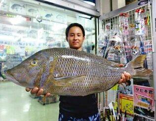 座間味島で74.5センチ、6.3キロのタマンを釣った新里海都さん=6月28日