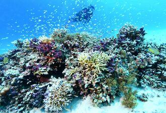 (資料写真)魚が群れるサンゴ礁=座間味村・阿真ビーチ