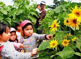 福島県産の種から育てたヒマワリ畑の迷路を楽しむ子どもたち=11日、糸満市摩文仁の平和祈念公園