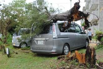 台風でなぎ倒された木によって壊れた車=28日午後0時15分ごろ、北谷町宮城・県営砂辺団地