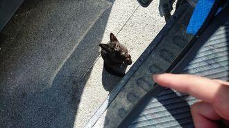 「何かお恵みを・・・」お昼休憩で弁当を食べているところにやってきたネコ