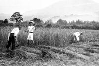 理想社会 100年の足跡/武者小路実篤の「新しき村」/東京で特別展開催