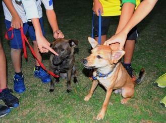 家庭犬のトレーニングを受けているピノ(左)とチップ=14日、県内の公園