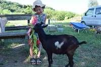 恋愛成就の御利益も♡ ハート模様・クリスマスイブ生まれのヤギ、沖縄で人気【動画あり】