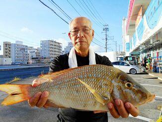 南部海岸で49.5センチ、1.6キロのタマンを釣った山入端立美さん=19日