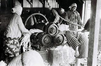圧搾機を使い、黒糖の原料となるサトウキビの汁を搾り出す美里村古謝(現沖縄市古謝)の女性たち。エンジンをかけるのは男性の役割だった。利用は1日1世帯に限られており、予約表に基づいて、サトウキビの収穫日程を調整していたという。圧搾機が置かれた「サーター屋」にはサトウキビを搾った汁を煮る巨大な鍋が複数置かれ、工場内は蒸気がこもっていた。れんが造りの煙突(約5メートル)からは煙がもうもうと出ていたという(写真は朝日新聞社提供)