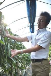 沖縄産バニラ、目指せ市場参入 「栽培に合った気候」新たな農産物に