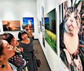 ユーモラスなネコの表情写真に笑顔を見せる来場者=15日午後、浦添市美術館(金城健太撮影)