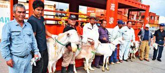 優良繁殖ヤギ増産に向けた石垣市初の事業で優良ヤギを貸与された生産組合のメンバーら=1日、石垣港