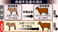 子牛高騰で進む一貫経営 畜産農家、繁殖から肥育まで