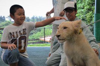 名付け親の末武昊大君(左端)と名前がセラムに決まったホワイトライオン=4日、沖縄こどもの国