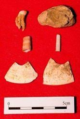 【7位】サキタリ洞遺跡で出土された(上段から)人骨、貝のビーズ、貝器=2月15日、那覇市の県立博物館・美術館
