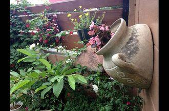50種類もの植物が息づく庭