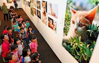 浦添市美術館で開かれている岩合光昭写真展「ねこ」