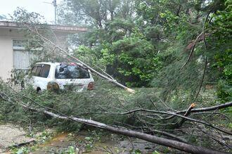 車と家に覆いかぶさる倒木=5日午後3時33分、南大東村在所