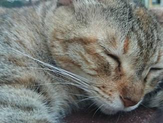 「寝込む猫、夢の中。」学校のベンチで熟睡している猫さんに遭遇しました。カメラを至近距離に近づけても猫さんは夢の中。