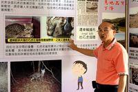 台湾生息のヤマネコ「石虎」 生息環境守って、地域づくりへ
