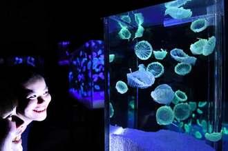 開幕を待つ神秘のアクアジュエリーアート展=7日、豊見城市豊崎・沖縄アウトレットモール・あしびなー