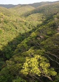 沖縄と奄美、世界自然遺産に推薦 来年登録めざす