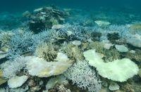 気温上昇続けば60年後に日本のサンゴ消滅? 環境省会議がまとめた「緊急宣言」の中身