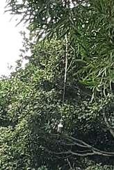 新たに見つかった米軍の照明弾らしき物体。木に引っかかっていた=6日、金武町伊芸区