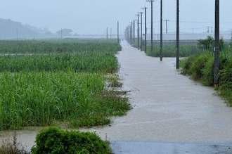 冠水したサトウキビ畑と農道=19日午後、糸満市米須