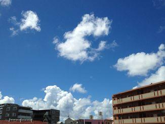 今日は青空が広がる真夏日となりました