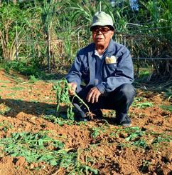 豚に荒らされたジャガイモ畑。宮里さんは「早く駆除してほしい」と訴える。育てていたジャガイモは全て食べられ、畑中に足跡が確認できる=6日、沖縄市知花